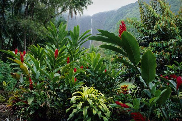 Rainforest On The Big Island